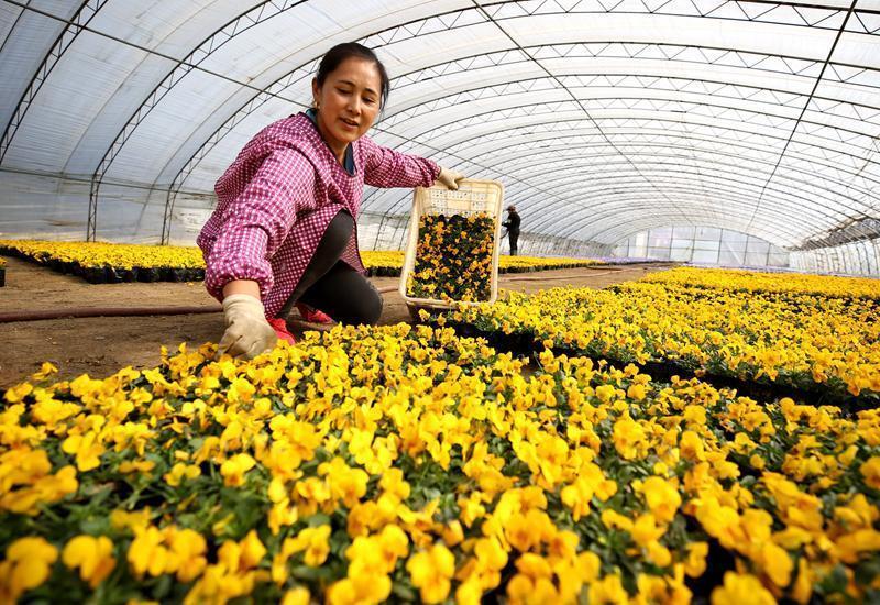 特色花卉产业助推乡村振兴 ()
