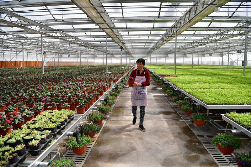 """陕西秦汉新城:都市农业让农民成为""""上班族"""" ()"""