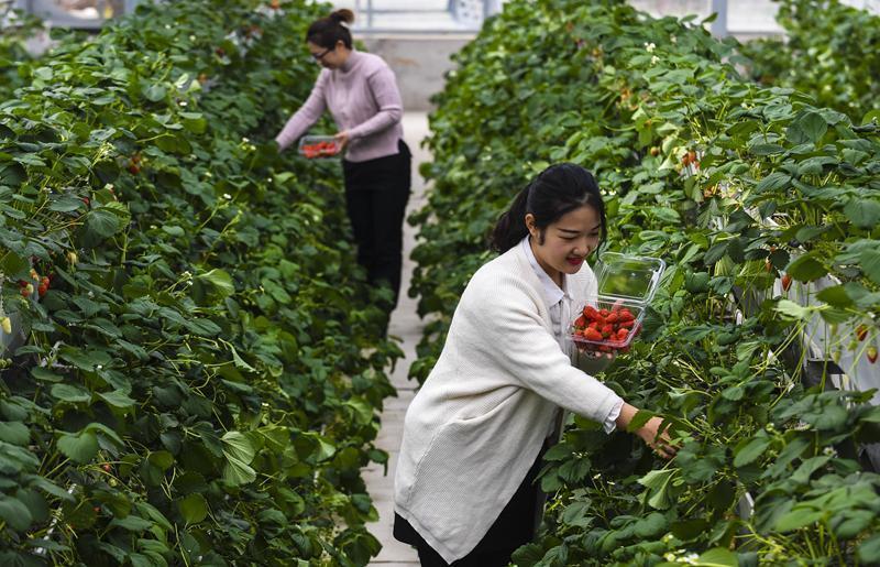 河北枣强:产业融合发展助力乡村振兴 ()