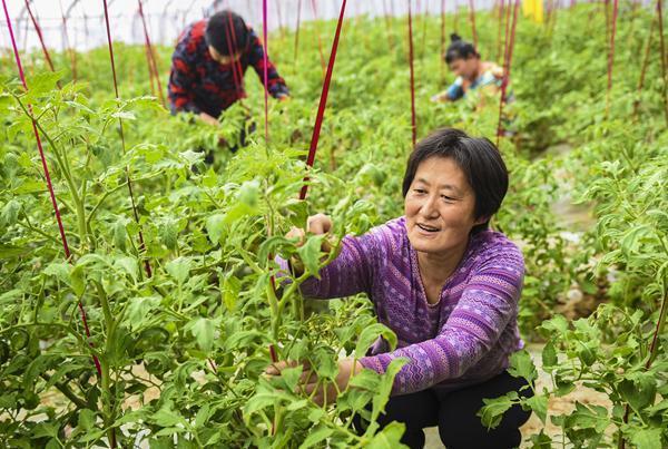 河北深州:建设现代农业园区助推乡村振兴