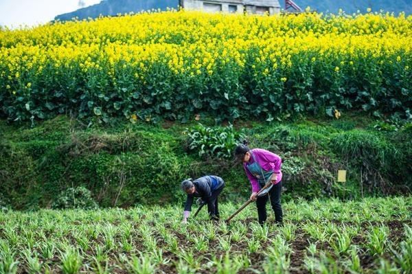 贵州六枝:春耕备耕忙