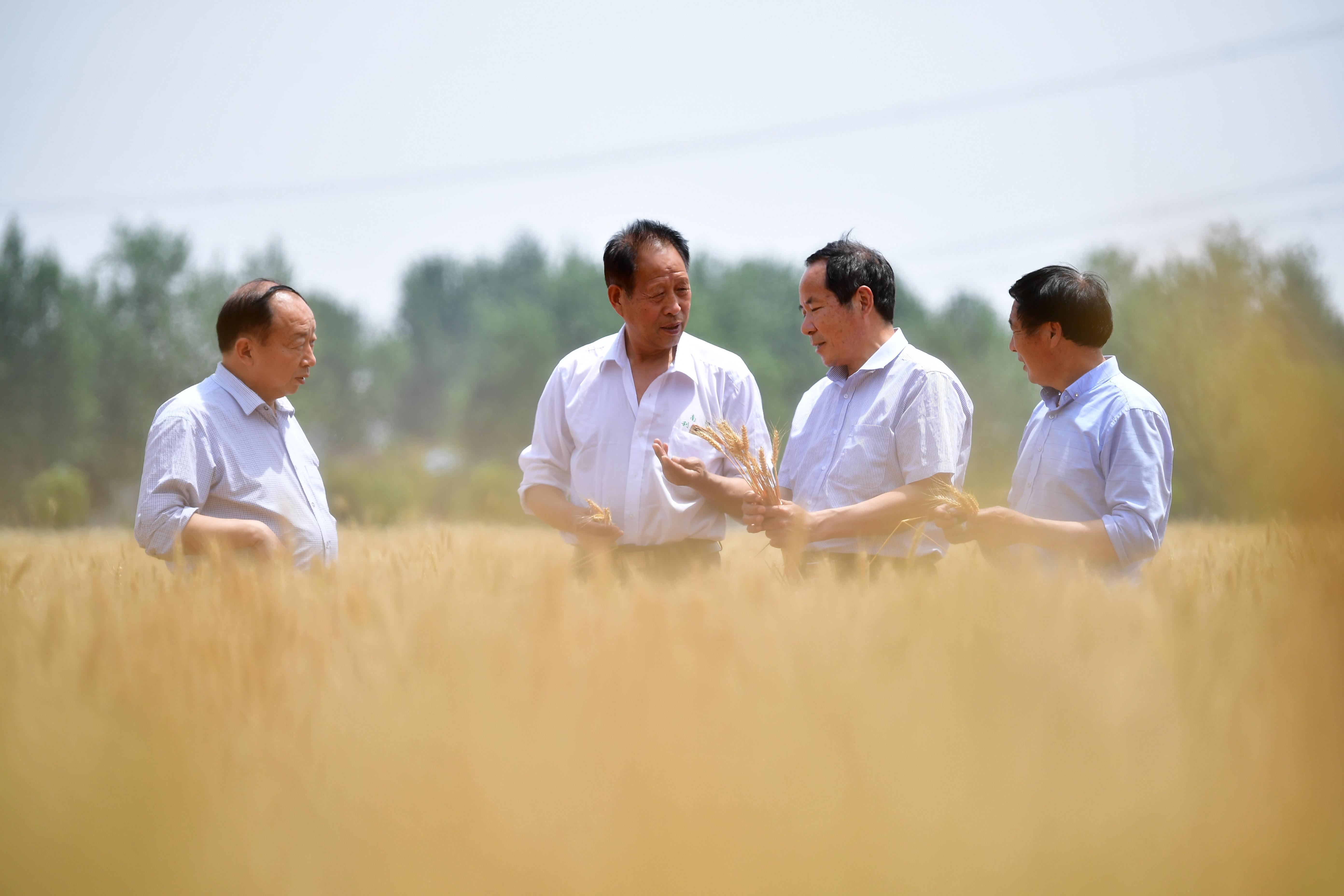 河南宛城:高标准农田保丰收 ()
