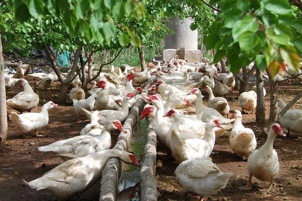 <p>开启畜牧业绿色发展新纪元</p><p>引领畜牧业现代化取得新进展</p>