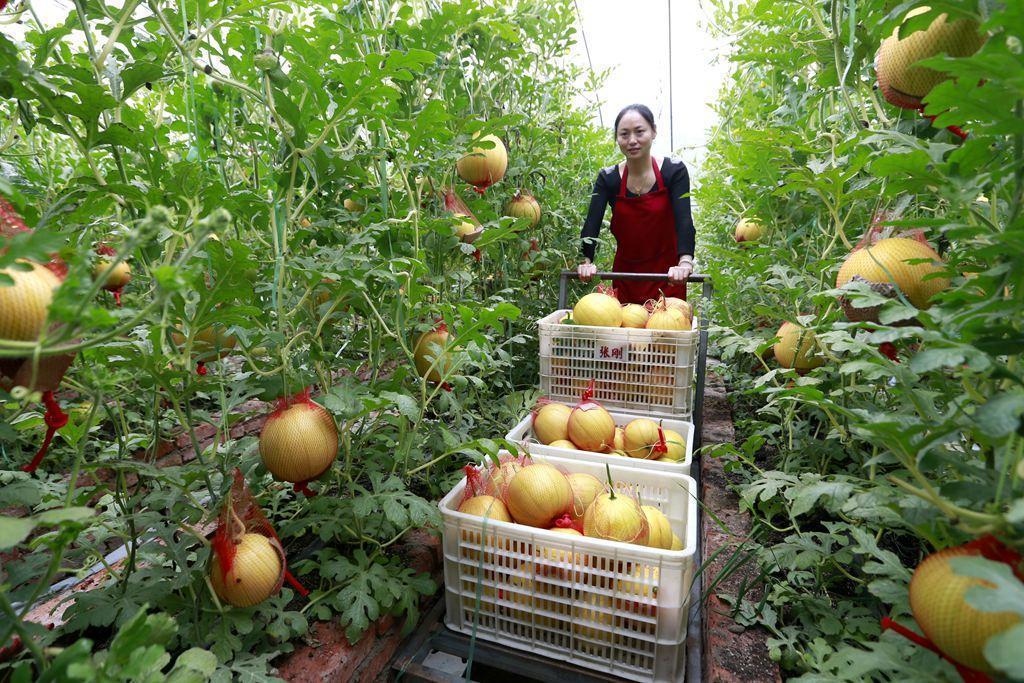 国办印发《关于完善支持政策促进农民增收的若干意见》