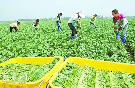 发展农业适度规模经营的认识与思考