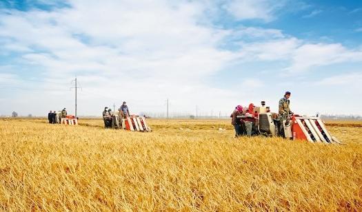 把握好农村土地适度规模经营的尺度