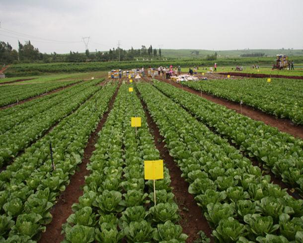 辽宁朝阳:农业共营制带来新变化